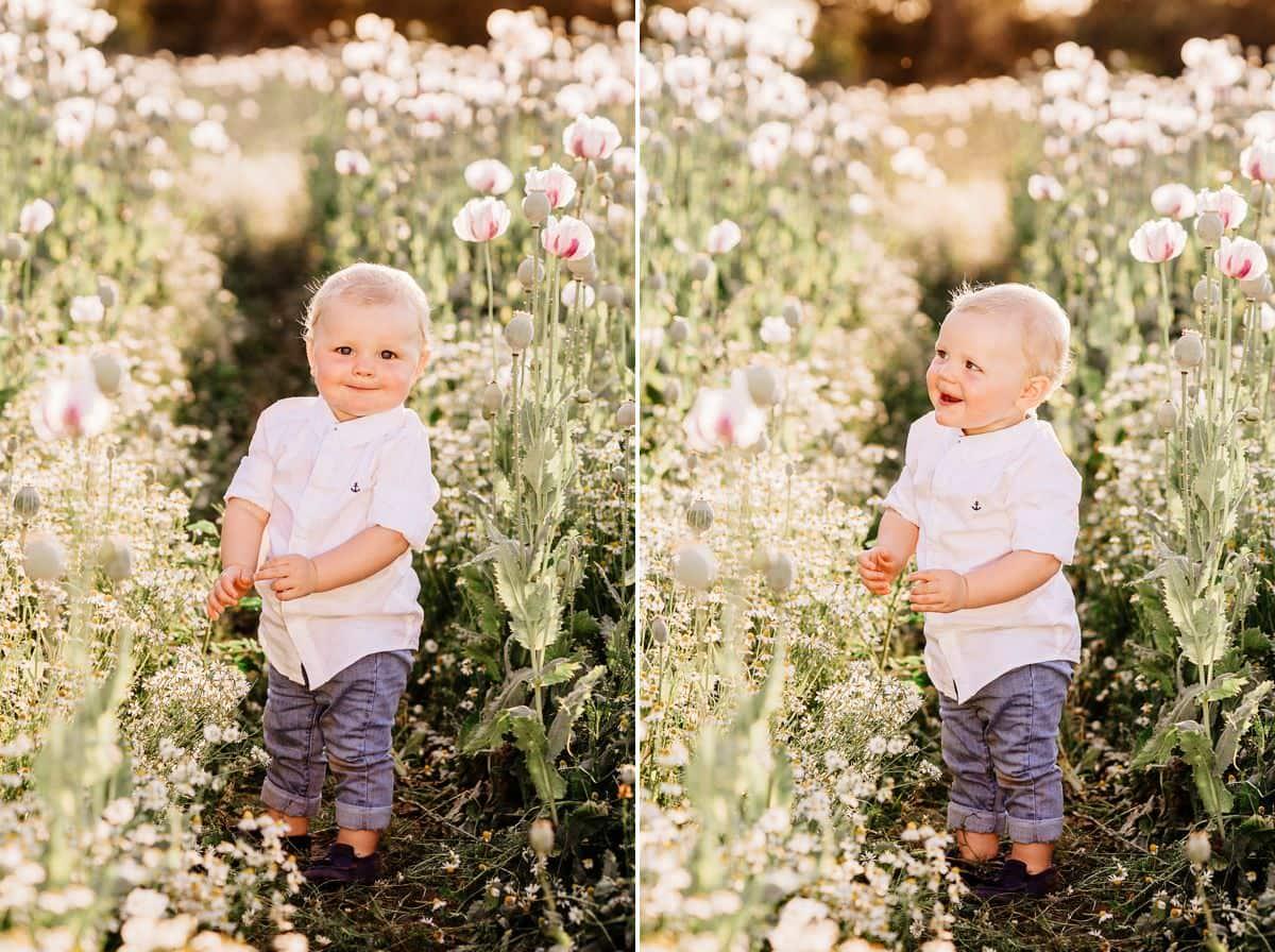 family photos in poppy fields